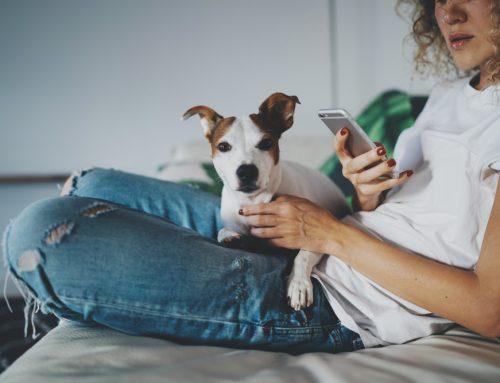 VitusVet: Our Pet Health Communication Solution