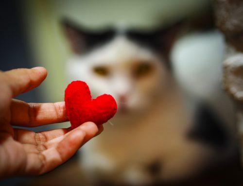 Heart Disease in Pets